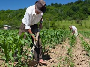 Juiz reconhece que moradia concedida sem custo a empregada rural é salário-utilidade