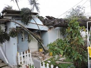 Município deve indenizar por prejuízos causados devido a queda de árvore em residência