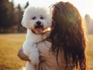 """""""Valor afetivo"""": juiz dá guarda de cachorro para mulher após separação do casal"""